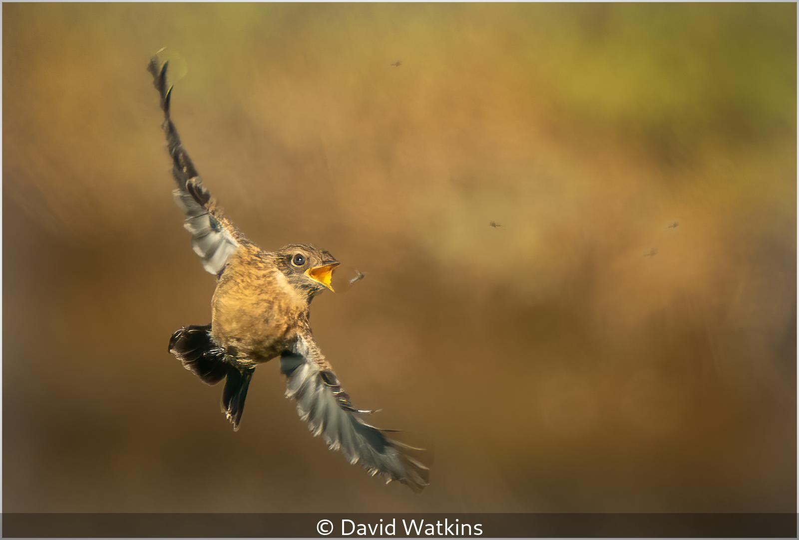 David Watkins - Catching Flies